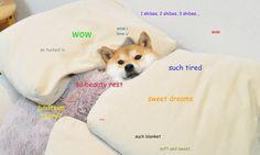 A doge image
