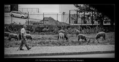 Ainda há pastores / Aún hay pastores / There are still sheperds [2013 - Gaia - Portugal] #fotografia #fotografias #photography #foto #fotos #photo #photos #local #locais #locals #cidade #cidades #ciudad #ciudades #city #cities #europa #europe #pessoa #pessoas #persona #personas #people #porto #oporto @Visit Portugal @ePortugal @WeBook Porto @OPORTO COOL @Oporto Lobers