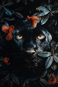 poster van een zwarte panter in de jungle omgeven door vogels en bladeren poster of a black panther in the jungle surrounded by birds and leaves Animals And Pets, Baby Animals, Cute Animals, Jungle Animals, Beautiful Creatures, Animals Beautiful, Animal Posters, Animal Wallpaper, Tiger Wallpaper
