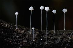 Rare Mushroom Photos Reveal the Visual Diversity of Fungi - My Modern Met
