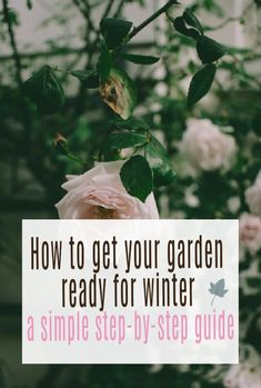 Getting your Garden Winter Ready – A super simple step by step guide to prepping a garden for the autumn and winter months. Gardening hacks that make all the difference#wintergarden #gardening #gardeningtips #abeautifulspace Beautiful Space, Beautiful Gardens, Beautiful Homes, Lawn Feed, List Of Jobs, Gardening Hacks, Leaf Flowers, End Of Summer, Lush Green