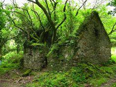 Kerry Wayの途中で見つかる廃墟(アイルランド)