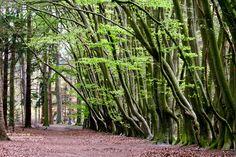 'Bending trees' by Dorri Eijsermans