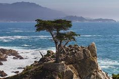 The Lone Cypress on 17 mile drive in Pebble Beach. It was hard to get to this photo as I had to fight for space with the bus loads of tourists. - Purchase this print. To purchase a print in any size you wish of this photo, or any of my photos go to my website www.iggymccarthy.com. Click the photos tab on the top and then the Instagram feed link. The link is also in my profile. #montereybaylocals - posted by Ignatius McCarthy https://www.instagram.com/iggymccarthy - See more of Monterey Bay…