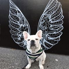 Frenchie in front of Kelsey Montague Art wings Graffiti Murals, Murals Street Art, Angel Wings Art, Dog Spa, Instagram Wall, Interactive Walls, Sidewalk Chalk Art, Mural Wall Art, Collaborative Art