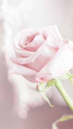 Pale rose....love these two colours pale pink and the soft green step...ideal for the bedroom