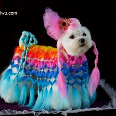 This dog has style