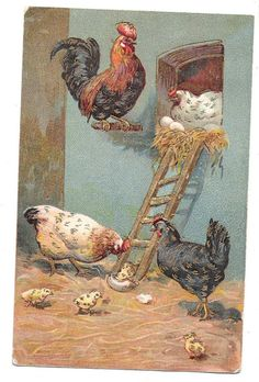 ameraucana: Color image of hen house scene with rooster watching his 'family' (date unknown)