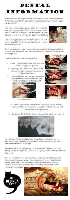 Dental information for pet owners. What you need to know before your pet goes under the anaesthetic.