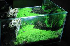 12 gallon fluval edge aquascape - Google Search