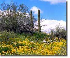 Sonoran Desert National Monument near Phoenix