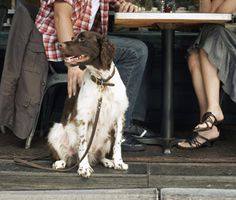 Do you take your #dog everywhere you go? 5 reasons you shouldn't...