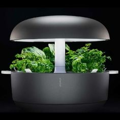 The 18 built-in LED lights are optimally balanced for growing herbs, greens and flowers indoors, and the irrigation system feeds moisture to the plant 0-8 times a day.