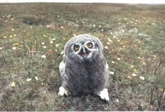 happy owl, posted via buzzfeed.com