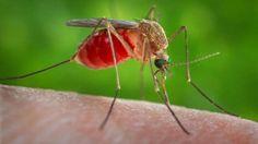 Invasión: cuán peligroso es el mosquito resistente al frío  El Aedes Albifasciatus es capaz de sobrevivir a las bajas temperaturas. Y se reproduce con gran velocidad cuando llueve. Cuál es el riesgo de una picadura  http://asistenteadomicilio.blogspot.com.ar