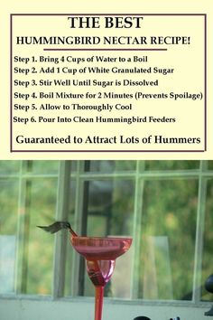 Homemade Hummingbird Food Discover Best Hummingbird Food Recipe Print our Hummingbird Nectar Recipe and see our step by step instructions for filling and cleaning your feeders with a formula for the hummingbird food sugar to water ratio. Garden Yard Ideas, Lawn And Garden, Garden Tips, Backyard Ideas, Homemade Hummingbird Nectar, Homemade Hummingbird Feeder, Recipe For Hummingbird Nectar, Homemade Bird Feeders, Hummingbird Plants