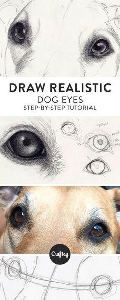 Drawing Tips Drawing Pencil Portraits - Drawing a realistic dog starts with the eyes! Learn about the structure of a dogs eye and get a step-by-step tutorial for how to draw dog eyes on Craftsy! Discover The Secrets Of Drawing Realistic Pencil Portraits Realistic Eye Drawing, Drawing Eyes, Painting & Drawing, Realistic Animal Drawings, How To Draw Realistic, Colour Drawing, Paper Drawing, Body Painting, 3d Drawings