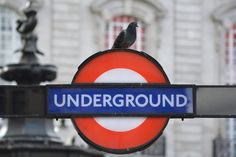 A London underground sign with a pigeon perched on the top of it. London Underground, Etsy Store, United Kingdom, Craft Supplies, Art Print, Sign, Digital, England Uk, Block Prints