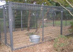 Fencing Dogs And Fence On Pinterest