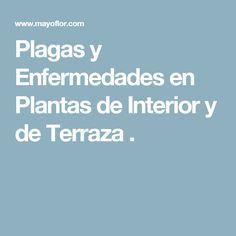 Plagas y Enfermedades en Plantas de Interior y de Terraza .