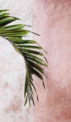 Pink + palm