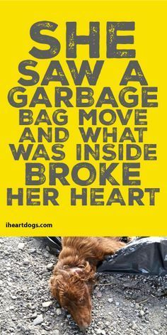 She Saw A Garbage Bag Move And What Was Inside Broke Her Heart