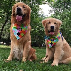 Golden Retriever E nossa seguidora @csv.chagas veio de longe!! da cidade de Queluz para nos conhecer pessoalmente!! E ainda nos trouxe Bandanas de presente! Obrigado pelo carinho!   Our follower came from another city to meet us This morning! And gave us those beautiful bandanas!! Thank you!!  #Bob #Marley #AumigosDoBobEMarley #ibirapuera #goldenretriever #goldenretrieversp #goldenretrieverbrasil #dogsofinstagram #petsagram #instapet #instapetbrasil #instaBobEMarley by…