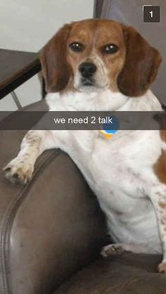 26 Snapchats From Your Dog!!!  Lol!