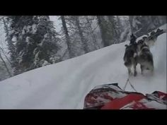 """Iditarod 2010: """"Aliy Cam"""" Happy River Steps.  This was a beautiful run in 2010 with more fresh snow than usual.  Wonderful way to feel like you got to ride with Aliy Zirkle."""