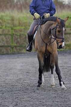 No arena to school your horse in? No problem! Here dressage trainer Ian Cast offers his tips on what to do.