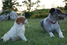Il cucciolo e l'adulto