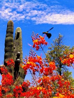 Sonora Desert, Arizona, USA visit when everything is blooming
