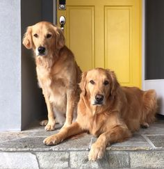 These beauties look like my Hank and Harley