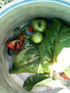 A small harvest of chard and tomatoes @ Green Apple Garden Playschool