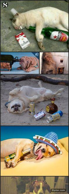 When Animals Get Drunk #funnypics #funnyanimals #drunkanimals #animals #slydor