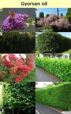 Hedges, Gardening Tips, Stepping Stones, Fence, Garden Design, Home And Garden, Landscape, Outdoor Decor, Plants