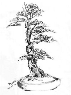 About The Art of Bonsai Project. An effort to explore the aesthetic and artistic elements of bonsai, including technical composition, presentation, display and other ways in which bonsai impacts the human eye and soul. Bonsai Tree Tattoos, Japanese Bonsai Tree, Tree Drawings Pencil, Pictures To Draw, Drawing Pictures, Japan Garden, Tree Sketches, Tree Tattoo Designs, Nature Drawing