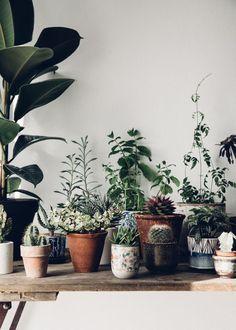 Beautiful inspiration for plant loving folk (my scandinavian home) - House Plants - ideas of House Plants - I N S T A G R A M Mini Plantas, Plantas Indoor, Green Plants, Potted Plants, Indoor Plants, Large Plants, Indoor Gardening, Organic Gardening, Art Furniture