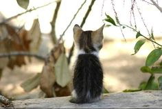 """It's a great big world out there."" -- Kittens in Malta [redux]  kitten"