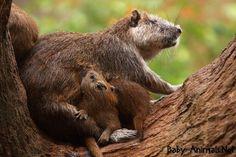 Baby beaver 2