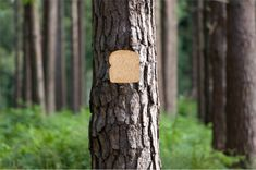 Staple Bread to Trees