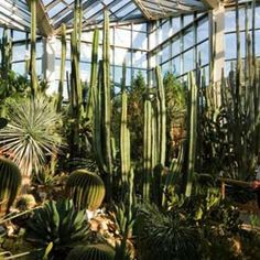 Marvelous Palmengarten botanical gardens Frankfurt Exotic flora and fauna in the heart of Germany