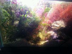 Refugium mega macro algea kit 1lb live rock copepods, amphipods,