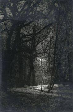 Josef Breintenbach, Light in the woods