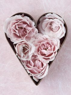 ~ Valentine photograph of miniature pink roses in a cookie cutter ~ ♥