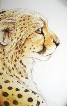 Cheetah by bevamme on DeviantArt Cheetah Drawing, Furry Drawing, Cheetah Cartoon, Realistic Animal Drawings, Colored Pencil Artwork, Elephant Sculpture, Lion Pictures, Cheetahs, Mini Paintings