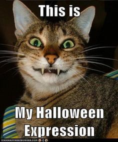 halloween funny pictures and captions myhalloweenexpression - Funny Cat Halloween
