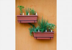 Jardineiras são ótimas para driblar a falta de espaço em apartamentos ou áreas pequenas. Da esquerda para a direita: manjericão, cebolinha, orégano, tomilho, alecrim e sálvia