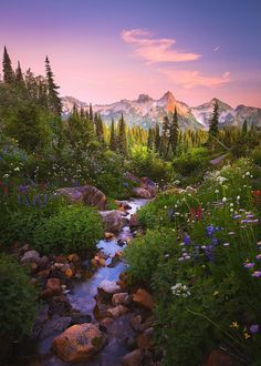 Mount Rainier National Park is a U. National Park located in Washington state…. Mount Rainier National Park is a U. Amazing Photography, Landscape Photography, Nature Photography, Hiking Photography, Photography Tips, Photography Aesthetic, Beautiful World, Beautiful Places, Wonderful Places