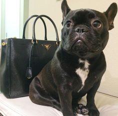Ne schwarze Bulldogge und ne schwarze Prada - was will man mehr ? <3